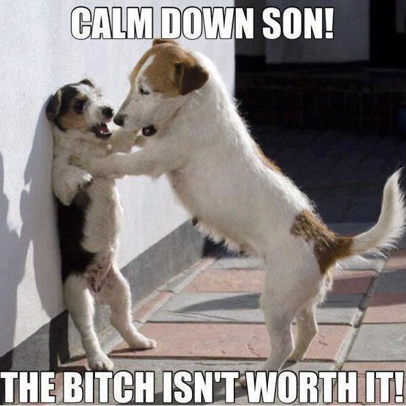 Funny Dog Meme Calm Down Son The Bitch Isnt Worth It Photo For Facebook 47 most funniest dog memes that will make you laugh,Dog Funny Meme