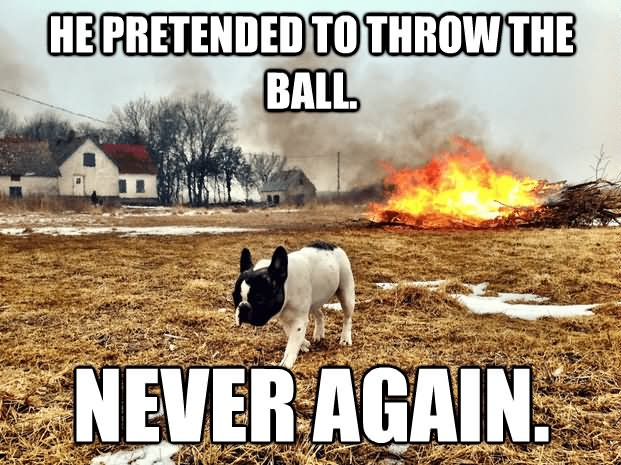 Must see Fake Throw Ball Adorable Dog - Funny-Dog-Meme-He-Pretende-To-Throw-The-Ball-Never-Again-Picture  Trends_863159  .jpg