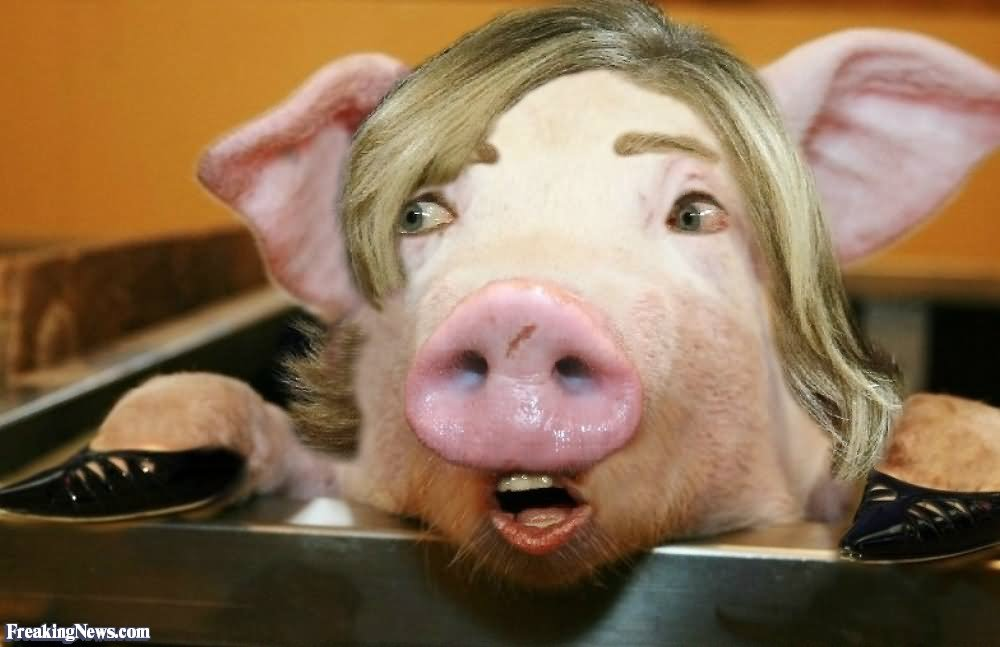 Funny Hillary Clinton With Pig Face Photoshop Image