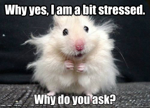 Meme Don T Stress Funny : 25 most funniest mouse meme pictures and images of all the time