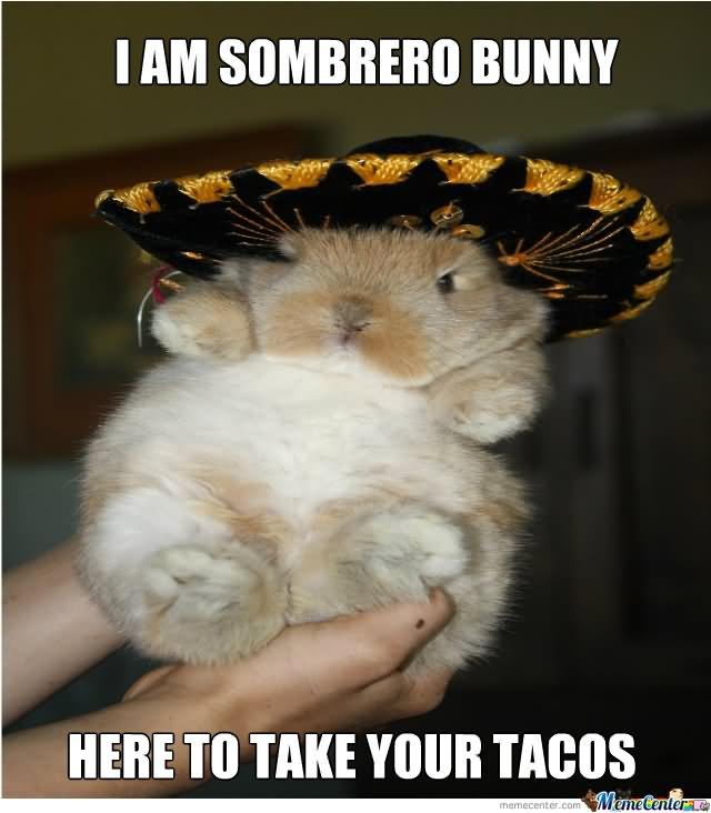 I-Am-Sombrero-Bunny-Here-To-Take-Your-Ta