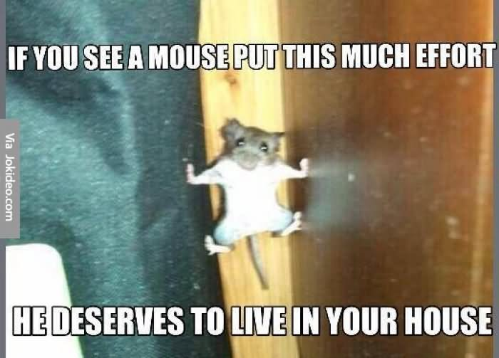 Funny Memes About House: 25 Most Funniest Mouse Meme Pictures And Images Of All The