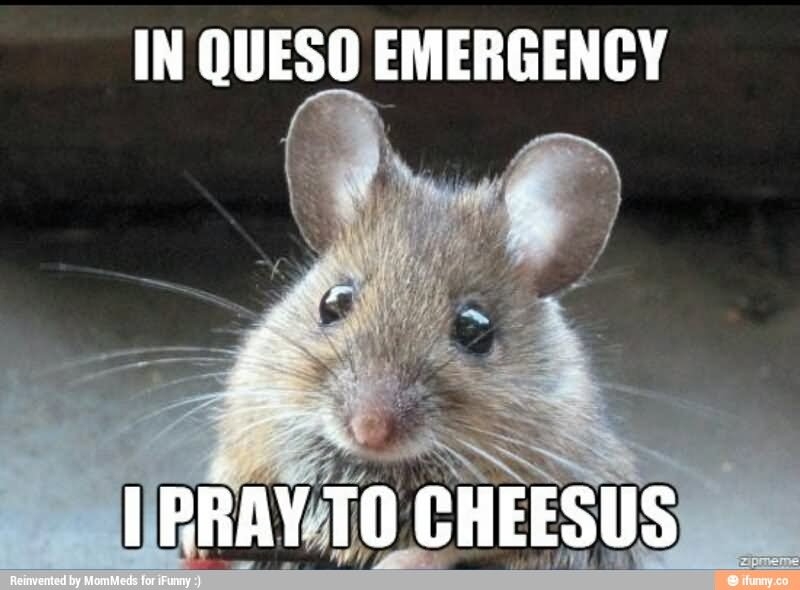 In Queso Emergency I Pray To Cheesus Funny Mouse Meme Image