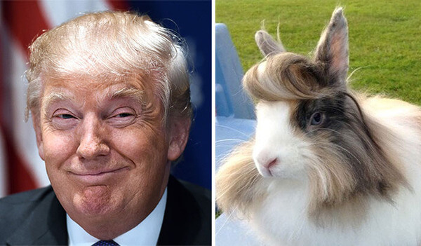 Little Bunny Hair Donald Trump Funny Picture