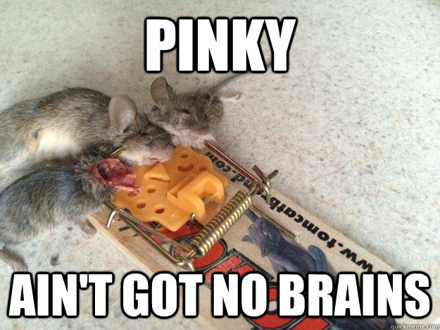 28 Very Funny Mouse Meme Pictures That Will Make You Laugh