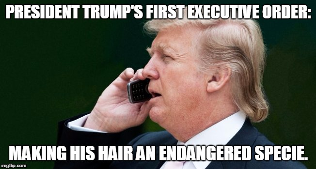 Image result for donald trump president memes