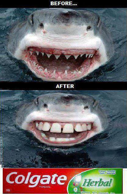 Shark Teeth Before And After Using Colgate Funny Teeth Meme Picture For Whatsapp 28 most funny teeth meme pictures that will make you laugh