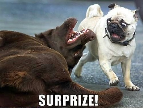 Funny Meme Dog : Most funniest dog memes that will make you laugh