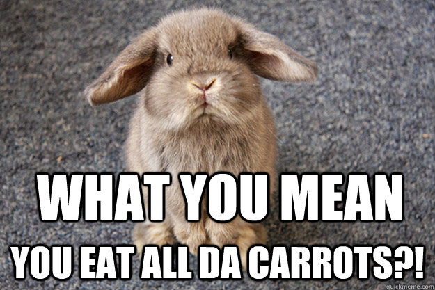 Rabbit Memes Best Collection of Funny Rabbit Pictures