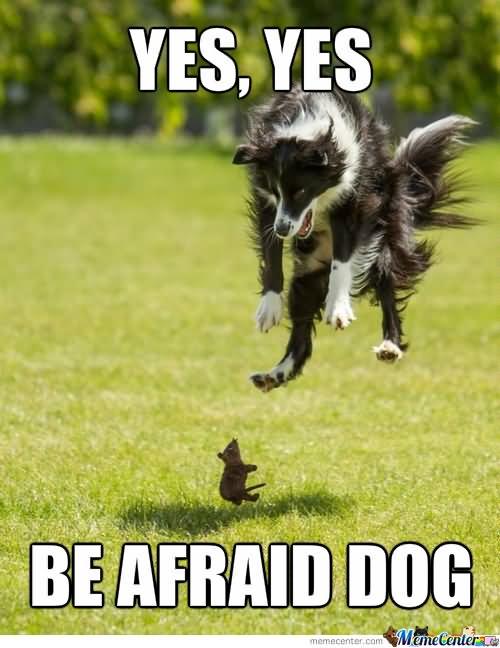 yes dog meme - photo #32