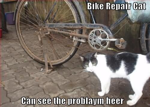 Bike Repair Cat Can See The Problaym Heer Funny Bike Meme Picture