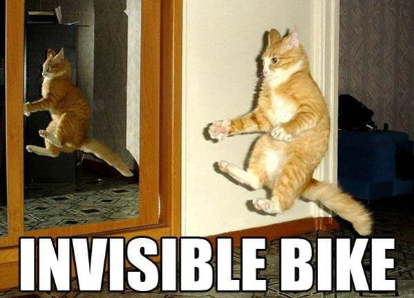 Funny Cat Drinking Meme : Most funniest bike meme pictures that will make you laugh