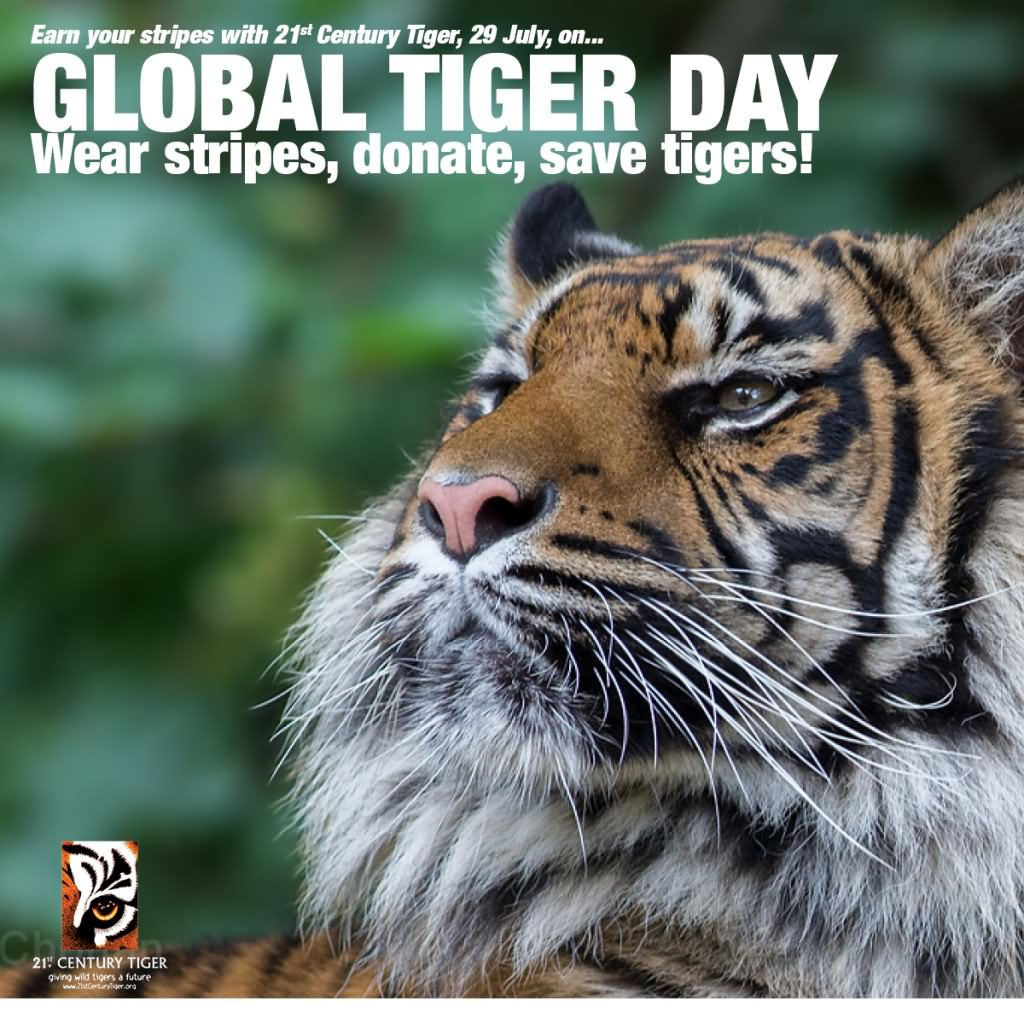 18 Best Global Tiger Day Wishes Pictures And Images