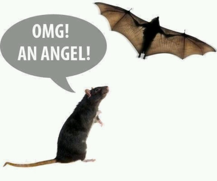 Omg An Angel Funny Bat Meme Picture 27 most funny bat meme pictures of all the time