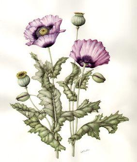 36 opium poppy flowers tattoos opium poppy flowers tattoo design mightylinksfo