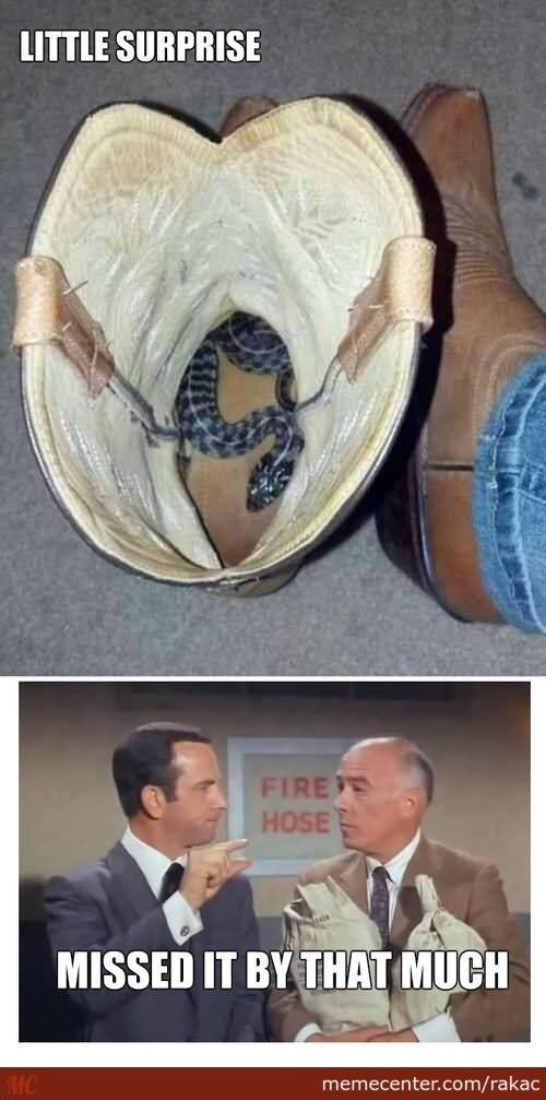 40 Funniest Boots Meme Pictures And Photos Of All The Time