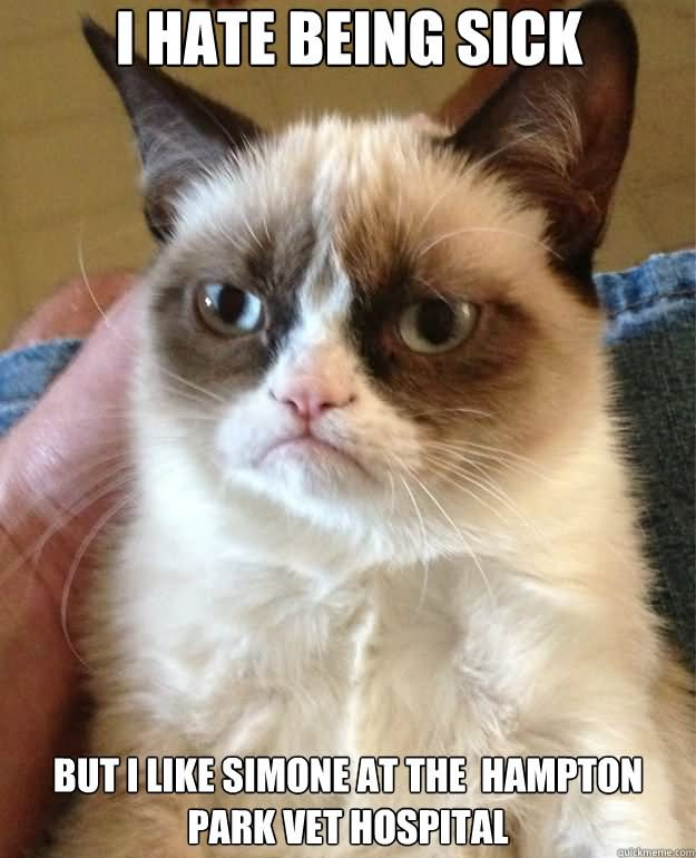Cat Hate Being Sick Very Funny Meme Picture