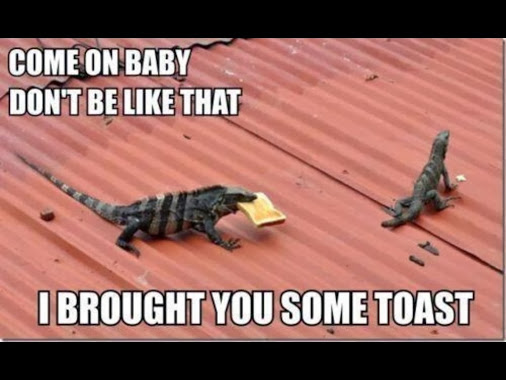 come on baby don t be like that i brought you some toast funny