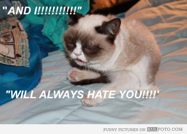 sick cat purring