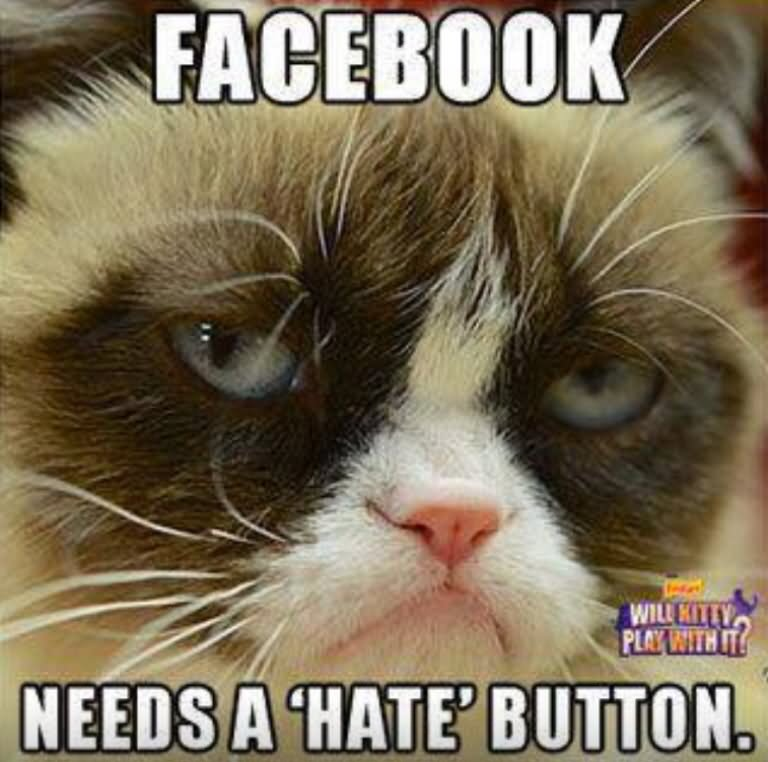 Facebook Needs A Hate Button Funny Grumpy Cat Meme Picture facebook needs a hate button funny grumpy cat meme picture,Meme Grumpy Cat