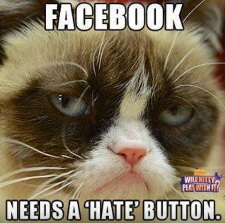 Funny Meme Grumpy Cat : Facebook needs a hate button funny grumpy cat meme picture
