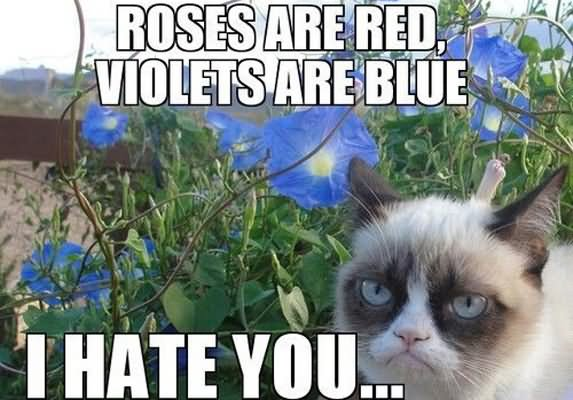 I Hate You Poems: 25 Very Funny Grumpy Cat Meme Pictures And Photos