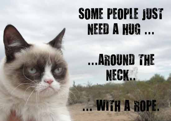 30 Very Funny Grumpy Cat Pictures And Images You Need To See Before Die