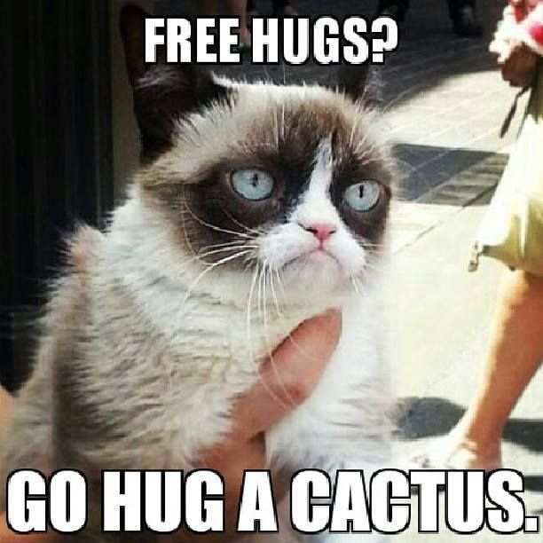 30 Very Funny Grumpy Cat Meme Pictures And Photos