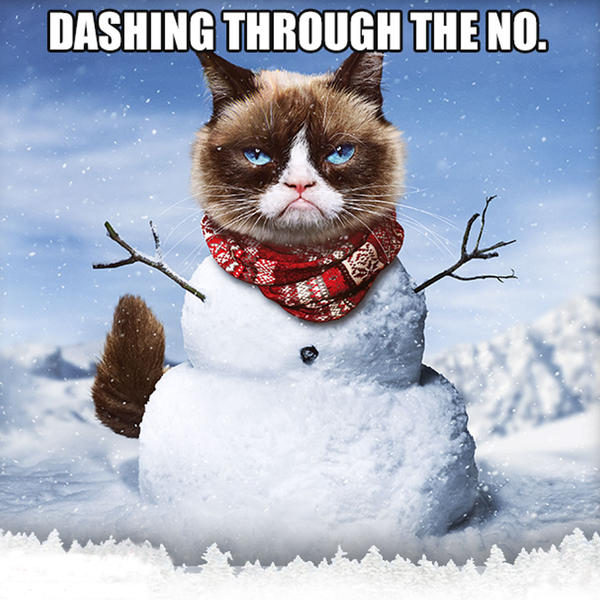 30 Very Funny Grumpy Cat Pictures And Images You Need To See Before You Die