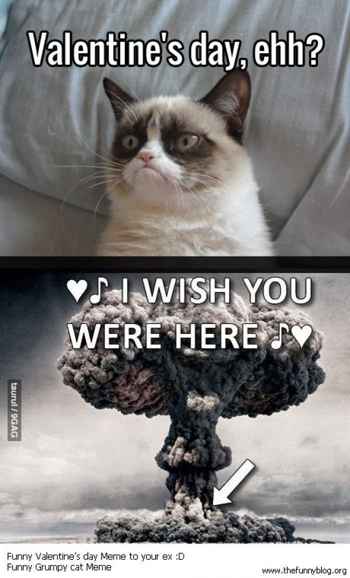 grumpy cat valentines day meme funny picture - Grumpy Cat Valentine