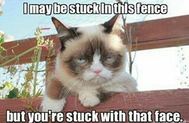 I May Be Stuck In This Fence But You Are Stuck With That Face Funny Grumpy Cat Meme Image 30 very funny grumpy cat meme pictures and photos,Meme Grumpy Cat