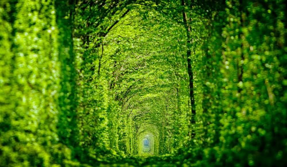 42 Incredible Pictures And Photos Of The Tunnel Of Love In Ukraine