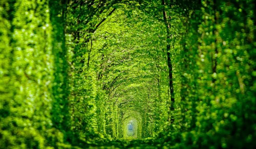 Image result for Tunnel of Love, Ukraine
