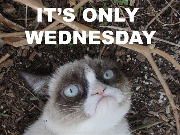 Funny Cat Meme About Work : Very funny grumpy cat meme pictures and photos