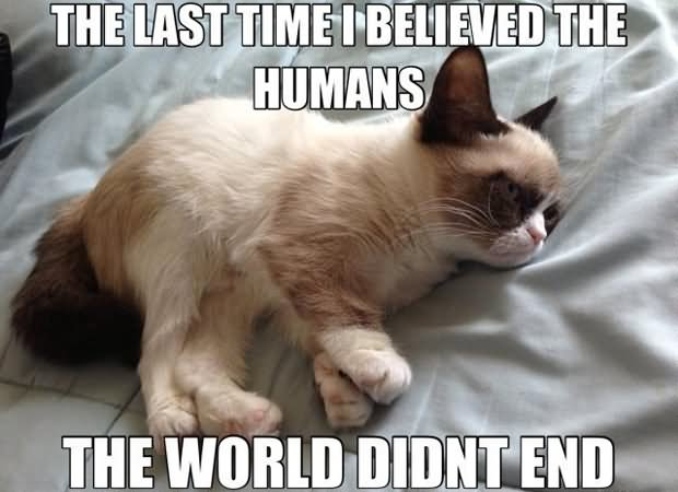Funny Cat Memes: 23 Funniest Grumpy Cat Pictures Of All The Time