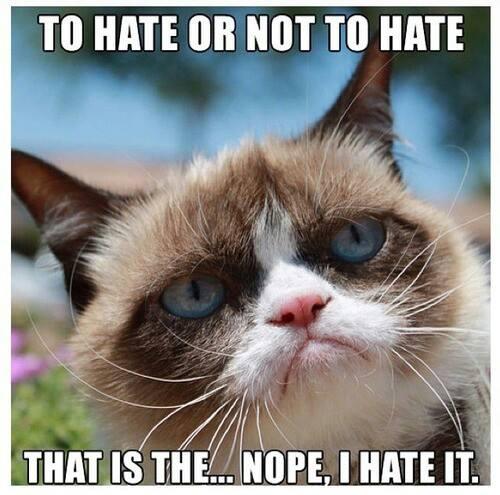 Not Funny Cat Meme : Most funniest grumpy cat memes on the internet