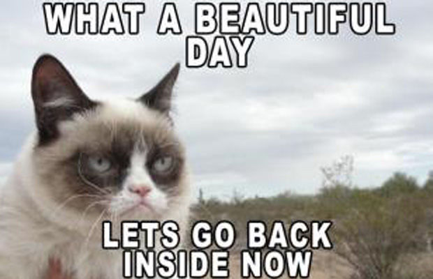 Beautiful day lets go back inside now funny grumpy cat meme picture