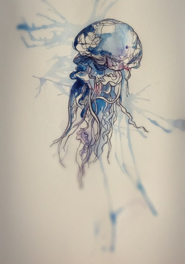 Gallery For gt Jellyfish Tattoo Drawing
