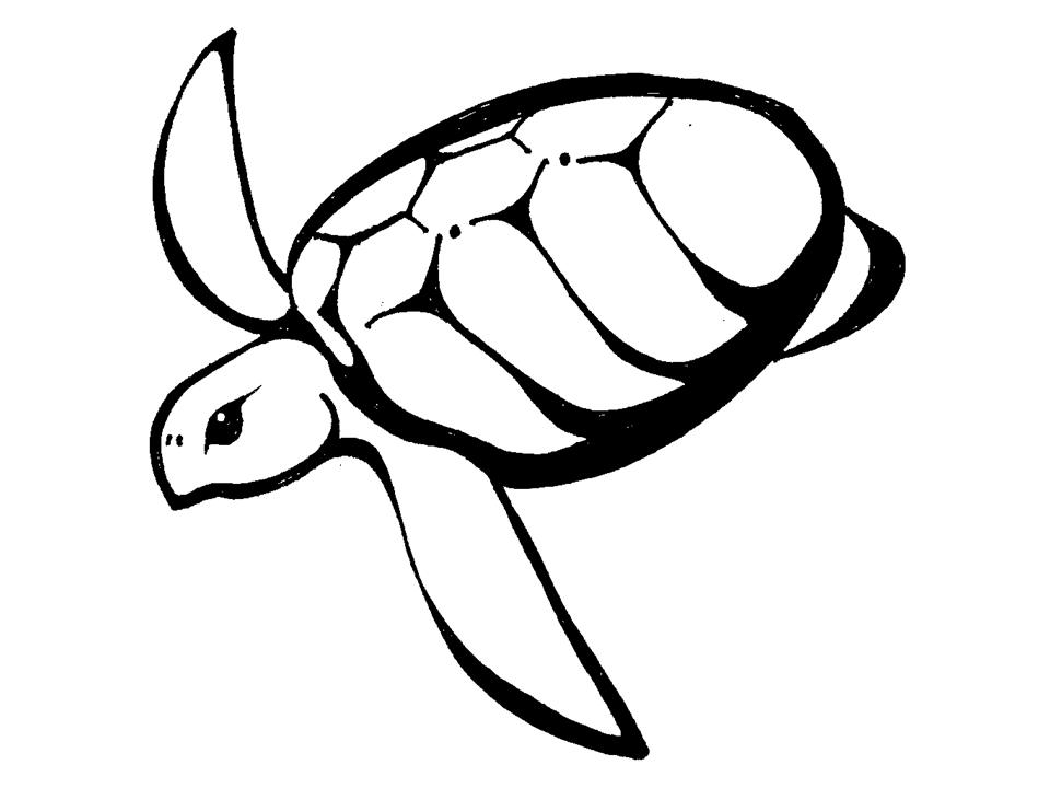 Gallery For gt Simple Turtle Design