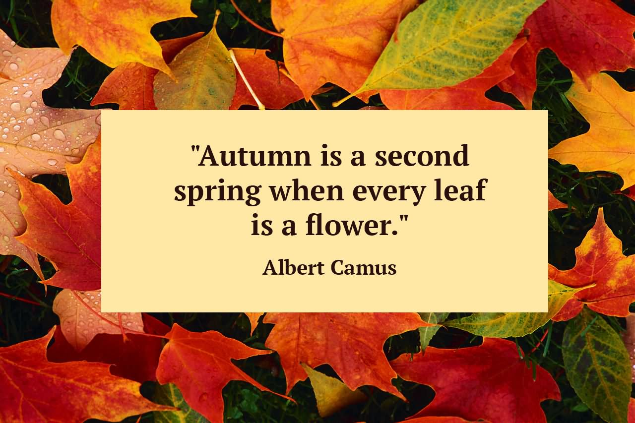 Image result for first day of autumn
