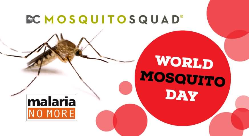 10 World Mosquito Day 2016 Wish Photos And Images