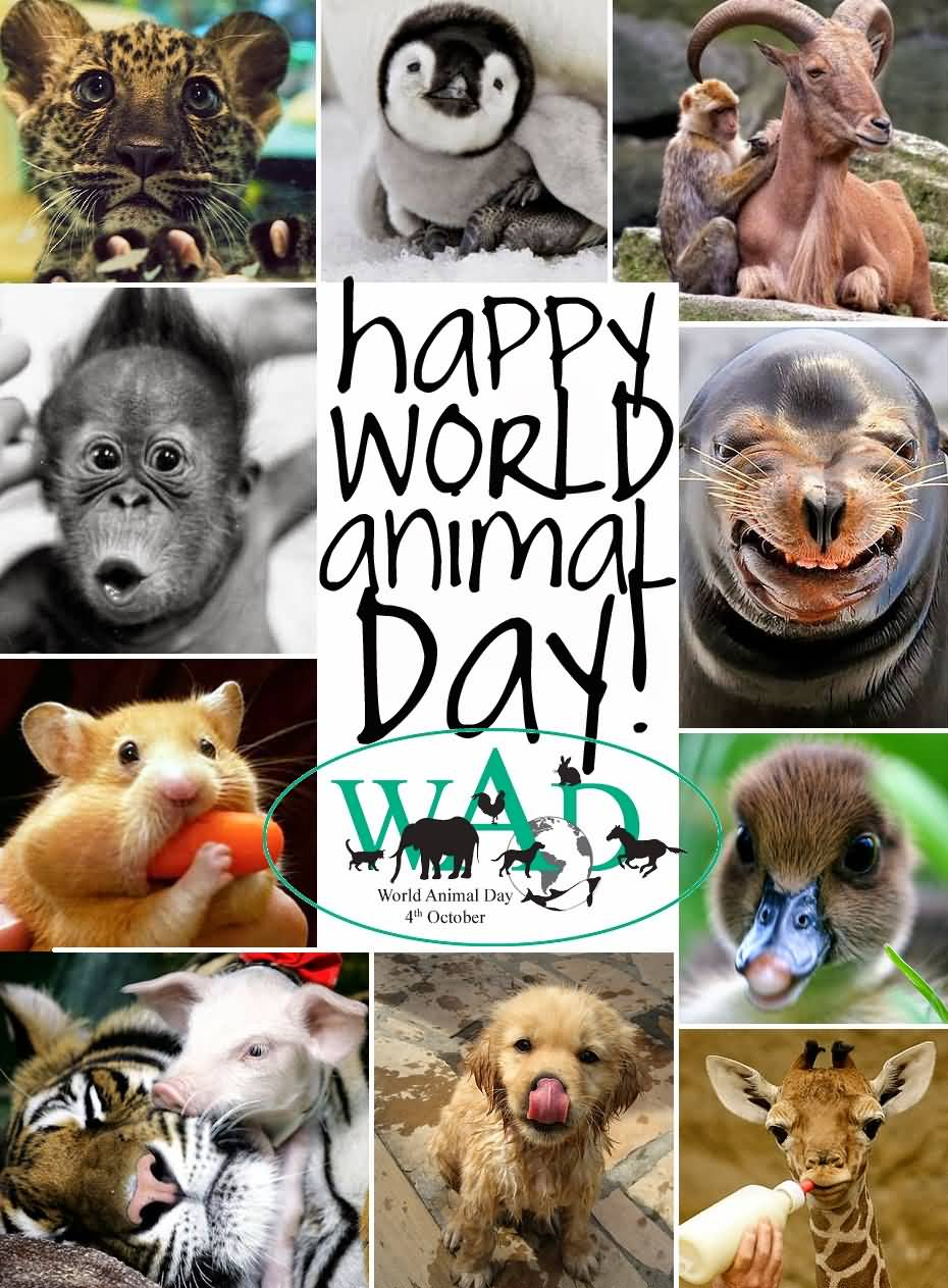Image result for happy world animal day