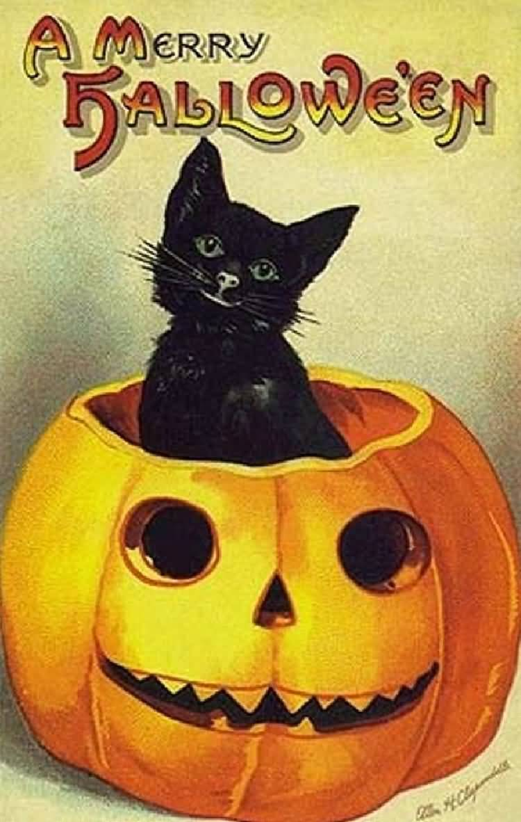 A Merry Halloween Black Cat In Pumpkin Picture