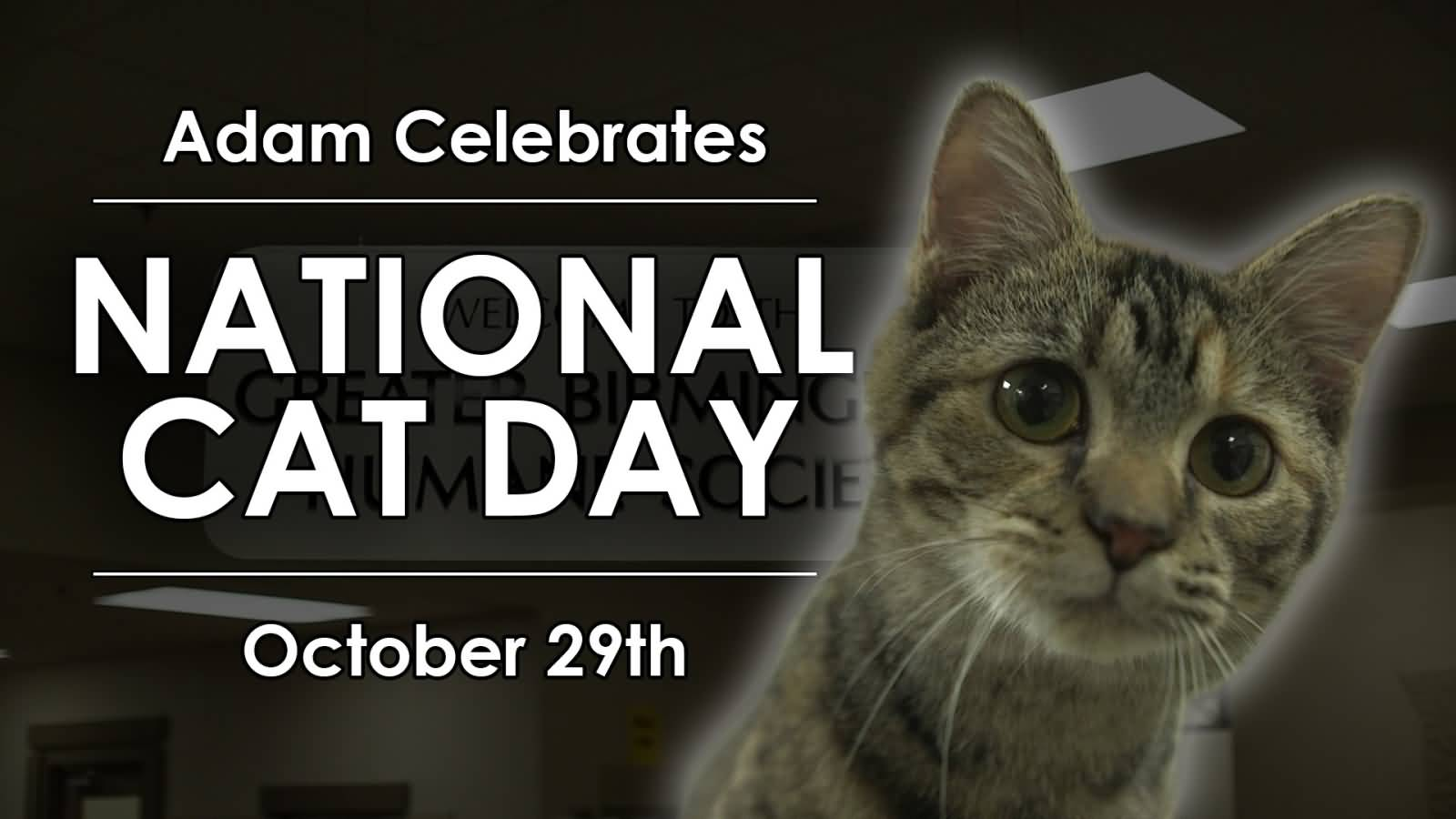 national cat day - photo #2