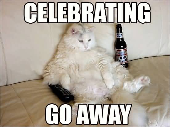 Celebrating Go Away National Cat Day Drunken Cat Picture celebrating go away national cat day drunken cat picture