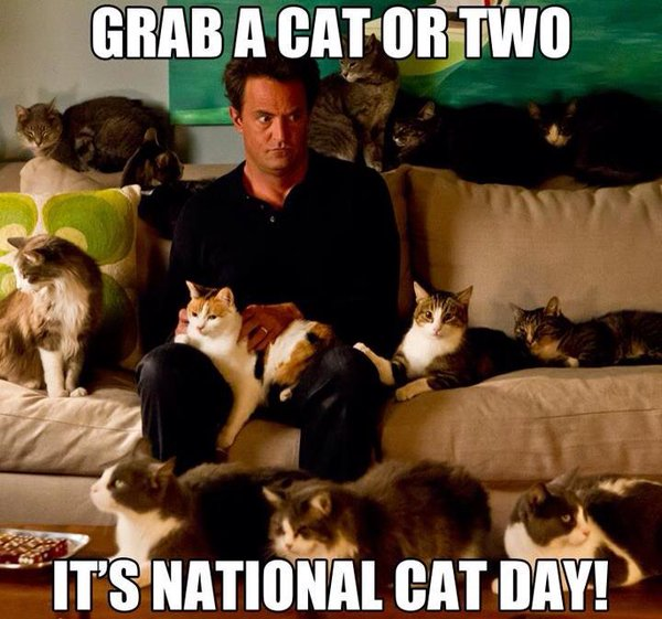 national cat day - photo #11