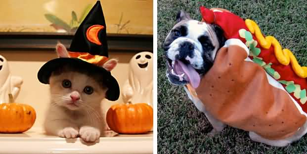 Matching Dog And Cat Costumes