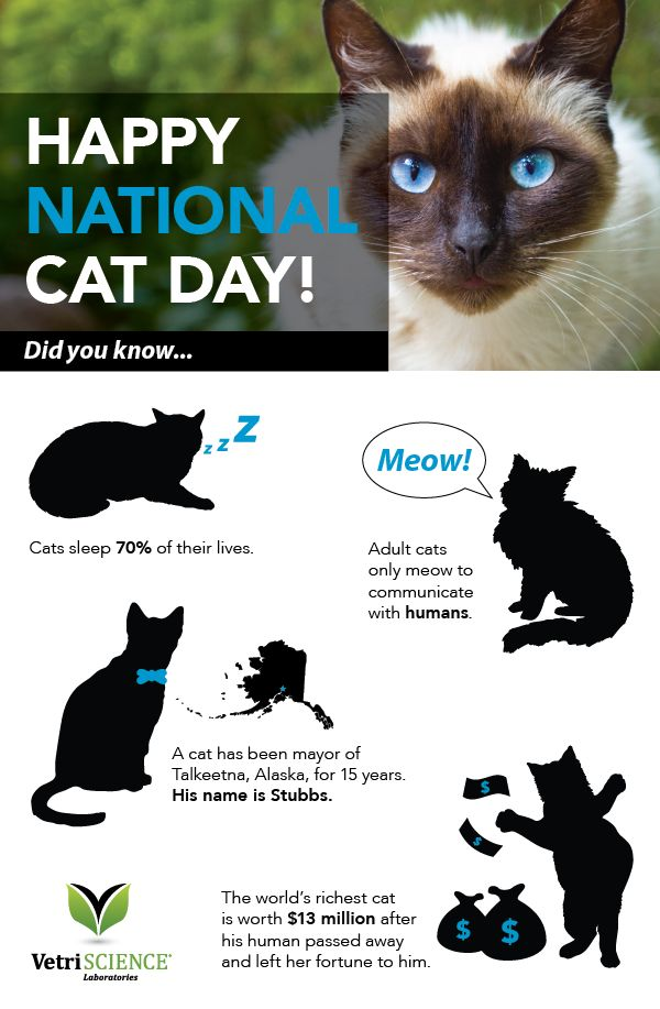 national cat day - photo #24