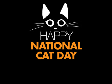 50 Best Pictures And Photos Of Happy National Cat Day Wishes