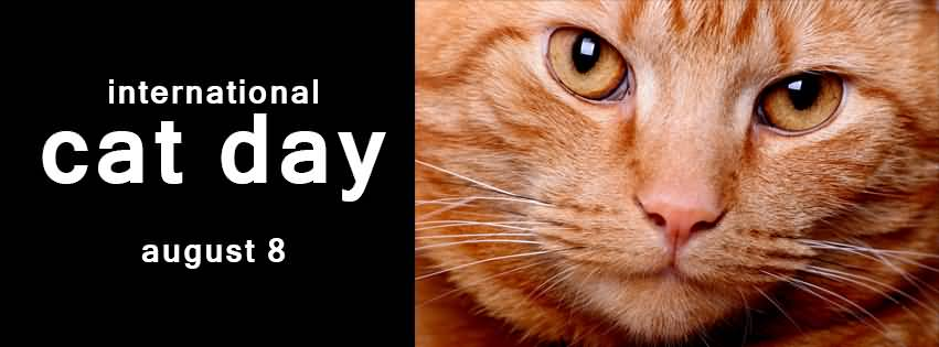 international cat day - photo #11